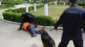 Călăraşi: Suspect de tâlhărirea unei femei pe stradă, reţinut de poliţişti