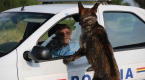 """Filmul """"Câini"""", premiat la Cannes, are două proiecții speciale la Călărași"""