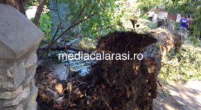 Autoturisme avariate dupa ce un copac a cazut peste acestea